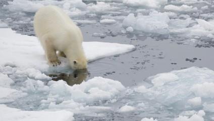 Антарктида на снимках Ника Коббинга