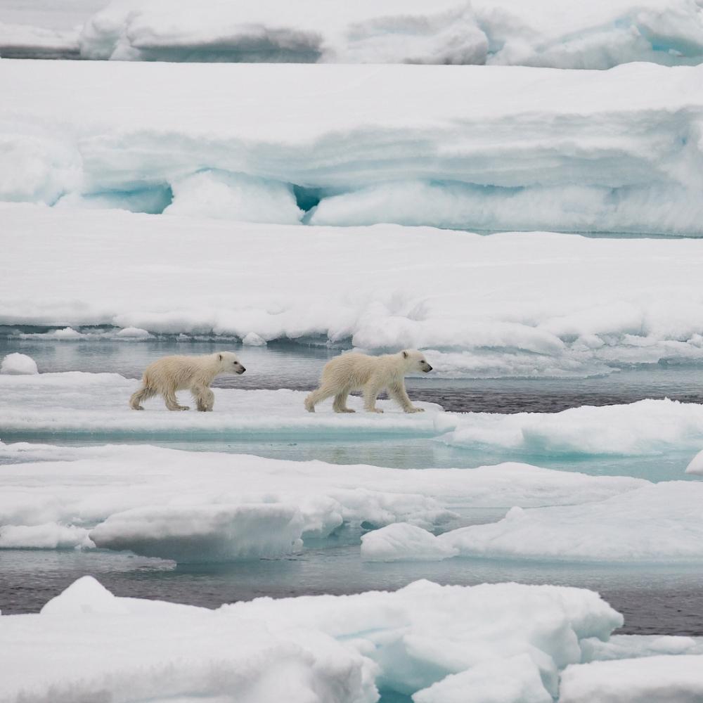 Арктические пейзажи Ника Коббинга (8)