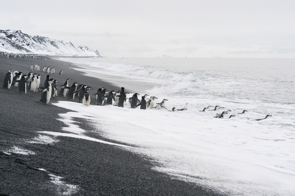 Арктические пейзажи Ника Коббинга (9)