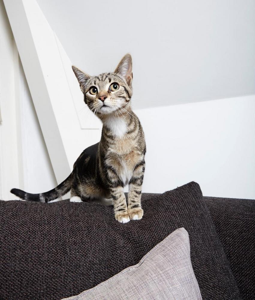 Изабелла Розендал — официальный фотограф домашних животных Амстердама (10)