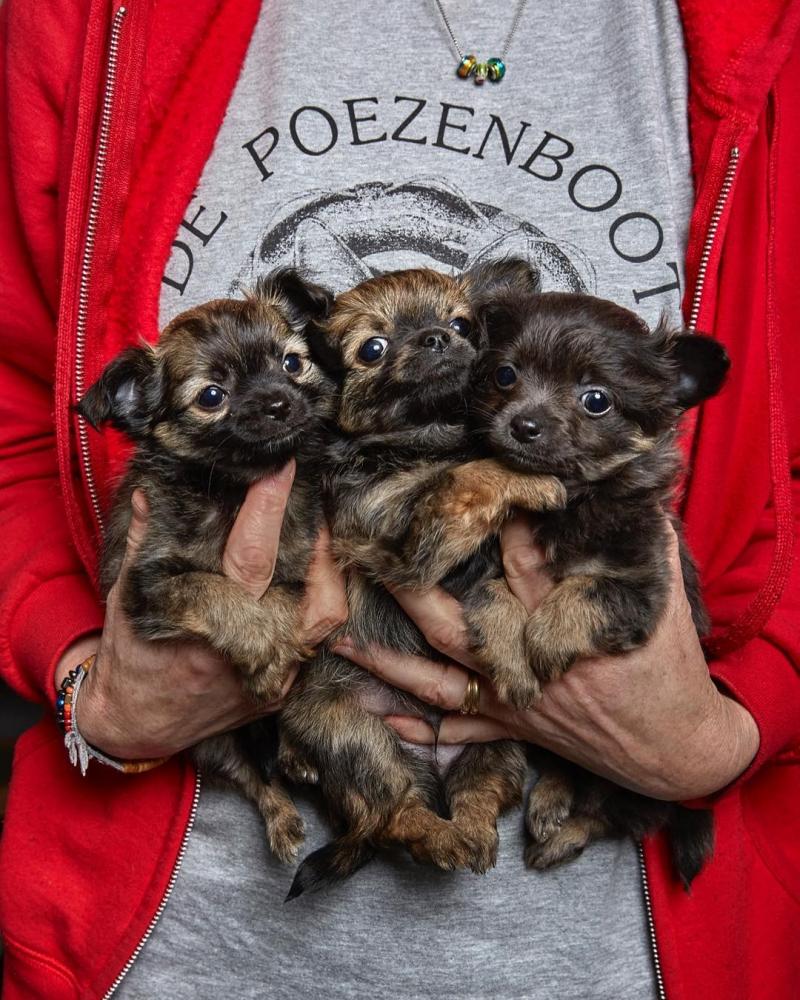 Изабелла Розендал — официальный фотограф домашних животных Амстердама (5)