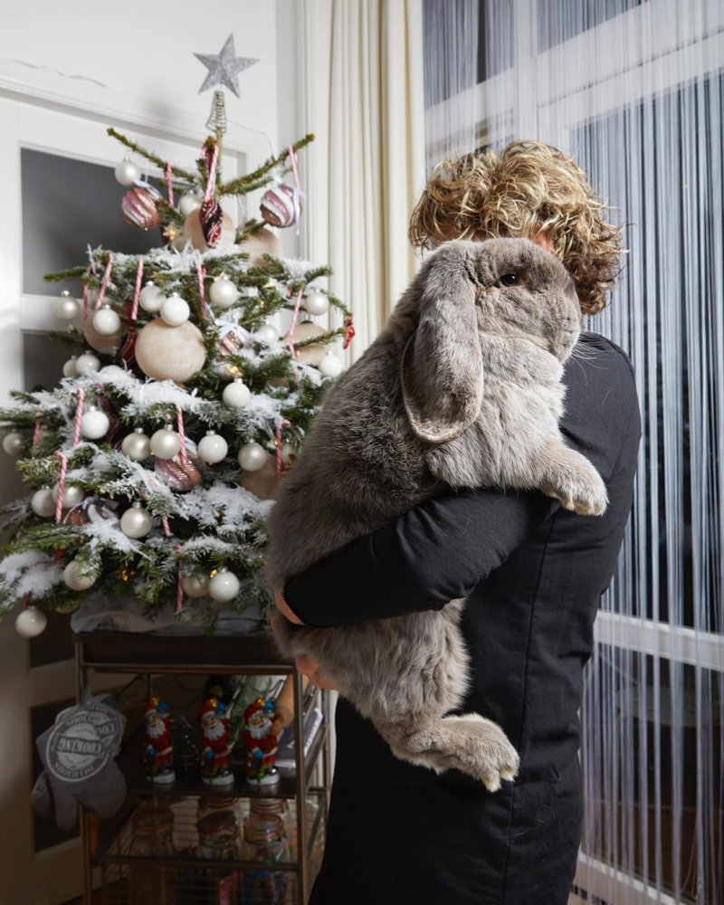 Изабелла Розендал — официальный фотограф домашних животных Амстердама (8)