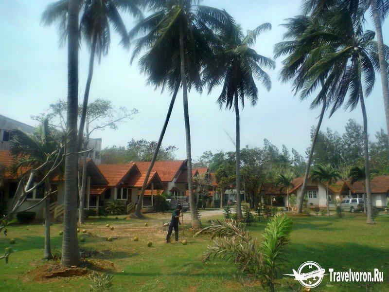 Как собирают кокосы в Таиланде_6 фото_