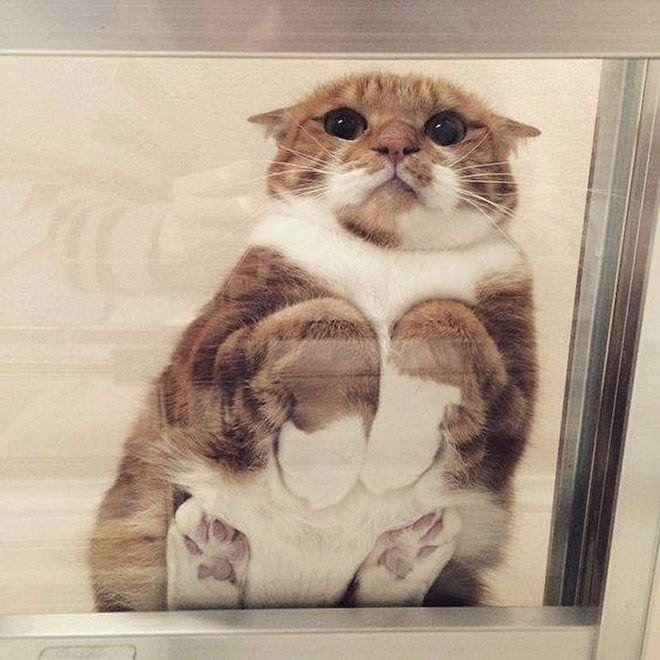 Коты на стеклянных столах и полках (19 фото) (12)