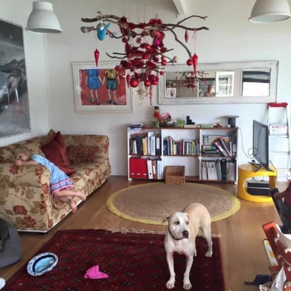 Креативные способы защиты новогодних украшений от домашних питомцев (20 фото) (1)