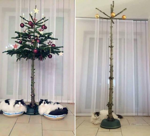 Креативные способы защиты новогодних украшений от домашних питомцев (20 фото) (2)