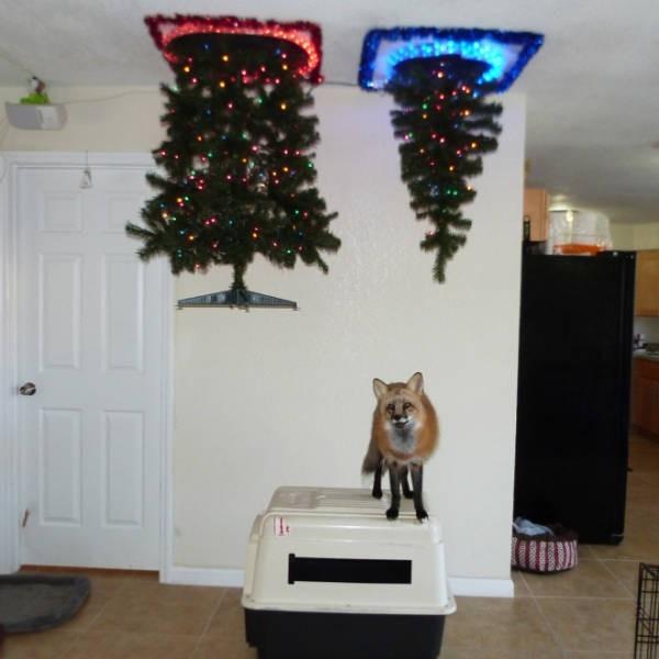 Креативные способы защиты новогодних украшений от домашних питомцев (20 фото) (7)