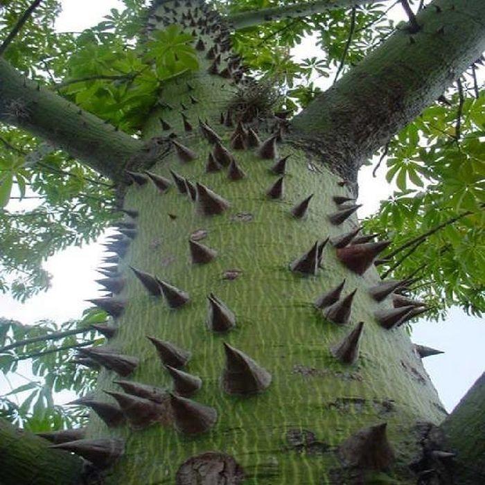 Невероятные фото самых прекрасных и странных деревьев планеты (1)