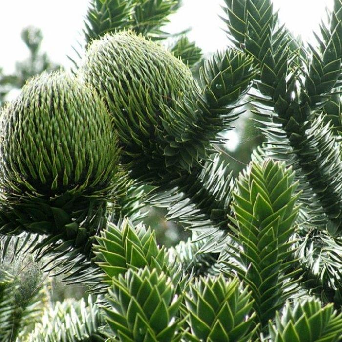 Невероятные фото самых прекрасных и странных деревьев планеты (3)