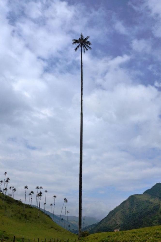 Фотографии самых необычных деревьев в мире