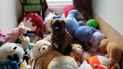 Выбор собаки: самые странные любимые игрушки питомцев со всего мира