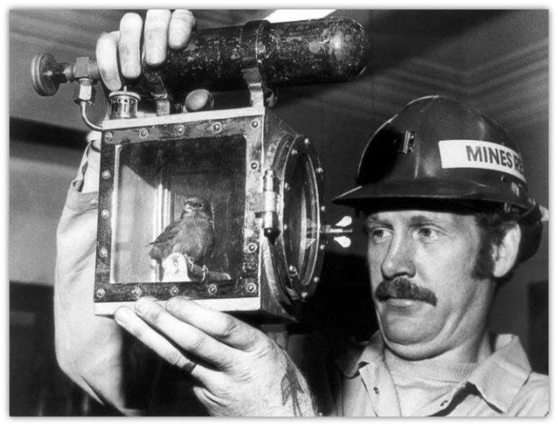 Канарейки почти 100 лет спасали шахтеров