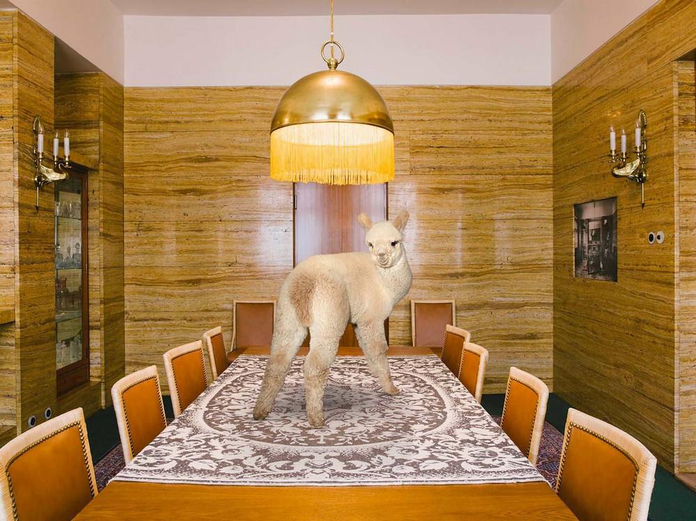 «Лучше жить с альпака» — самый веселый и безмятежный календарь