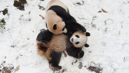 Забавные животные всего мира в фото
