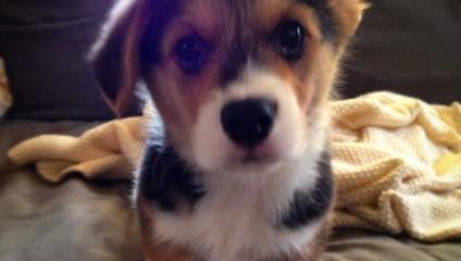Собаки от А до Я: самые смешные и необычные фотографии