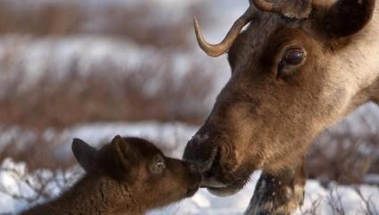 Минутка позитива от животных: самые смешные фото