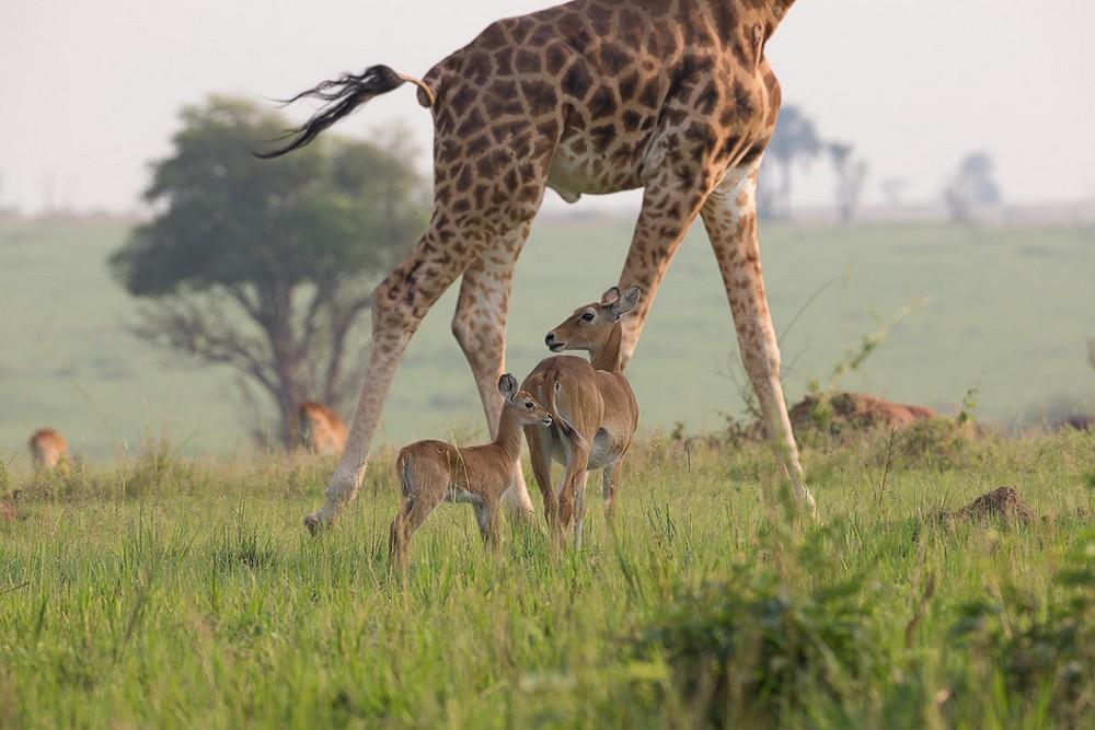 Дикие животные в фотографиях Мелиссы Гру