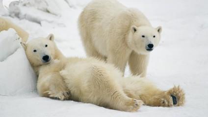 Дикие животные в фотографиях Томаса Мангельсена