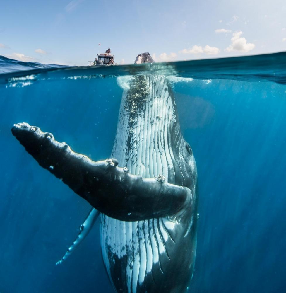 Невероятные фотосессия кита с человеком (1)