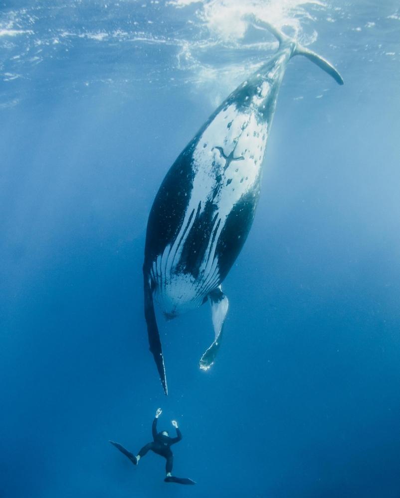 Невероятные фотосессия кита с человеком (2)
