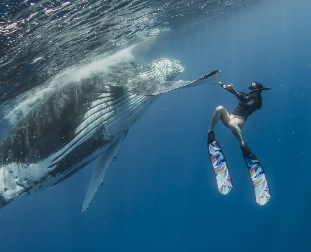 Невероятные фотосессия кита с человеком (3)