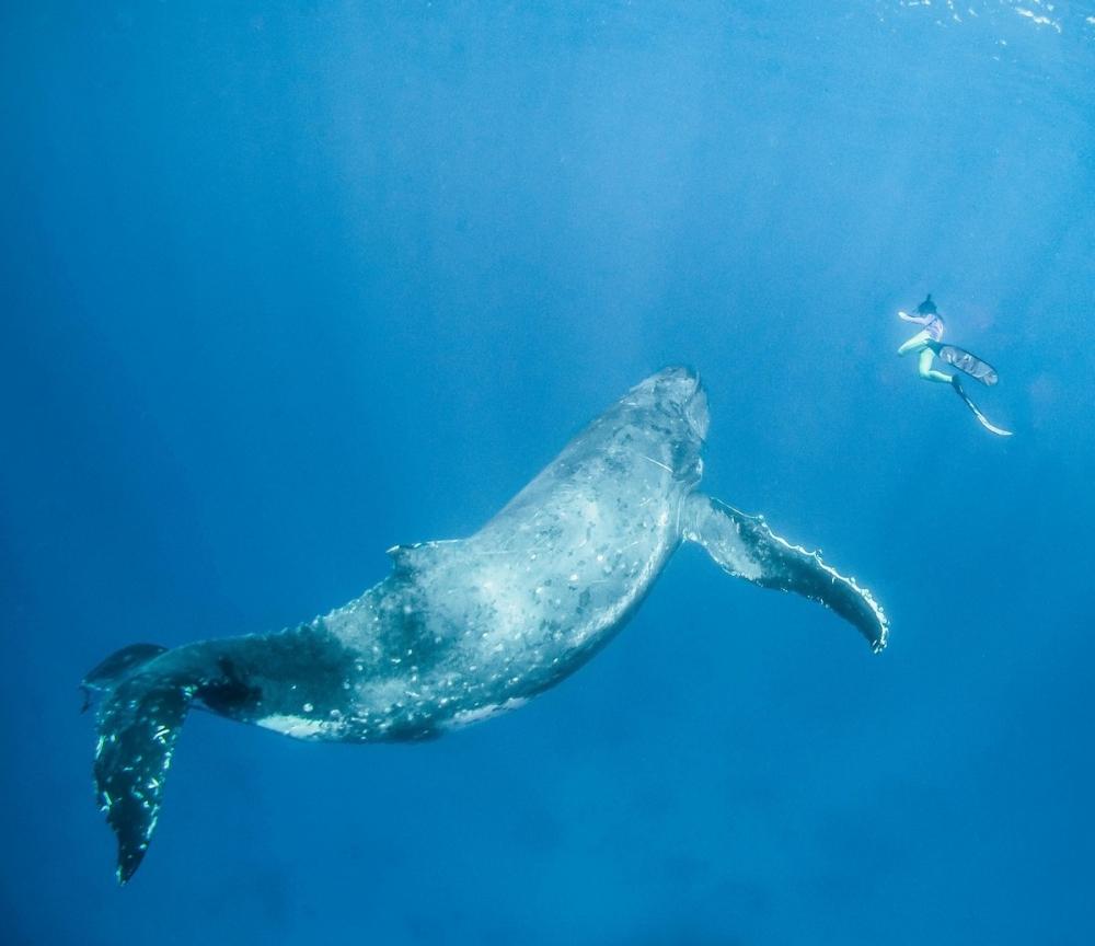 Невероятные фотосессия кита с человеком (4)
