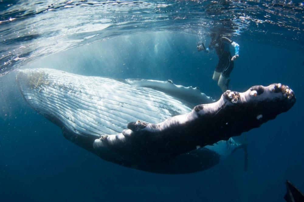 Невероятные фотосессия кита с человеком (5)