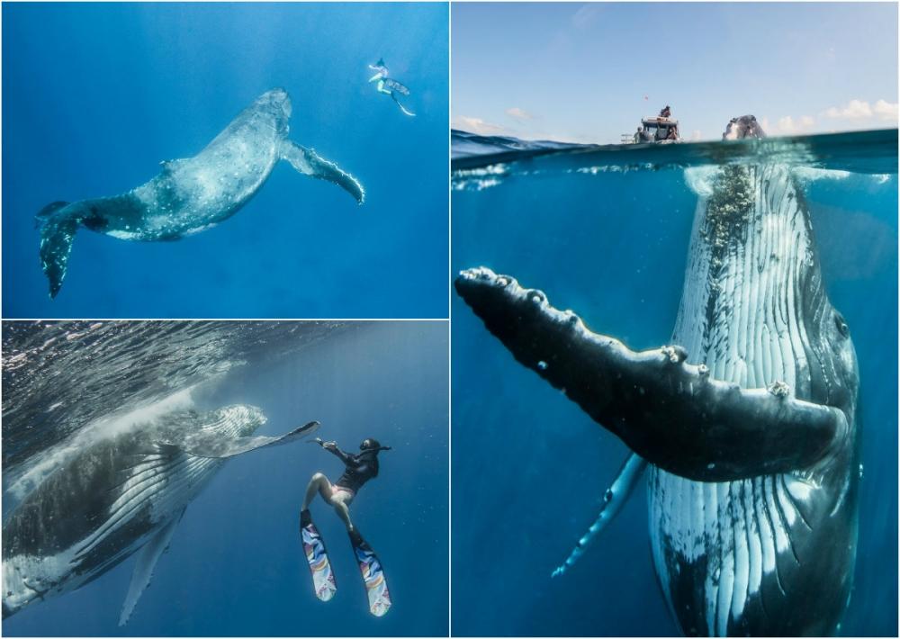 Невероятные фотосессия кита с человеком