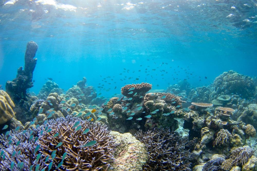 Поразительные подводные фотографии Бена Хикса (10)