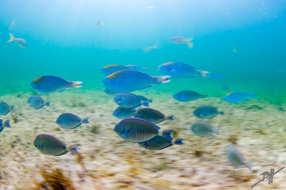 Поразительные подводные фотографии Бена Хикса (12)