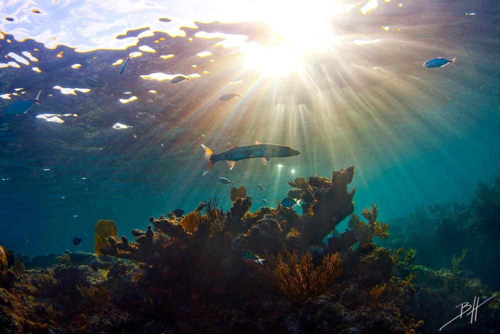 Поразительные подводные фотографии Бена Хикса (13)