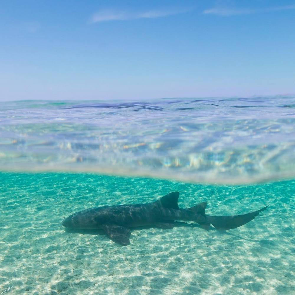 Поразительные подводные фотографии Бена Хикса (4)