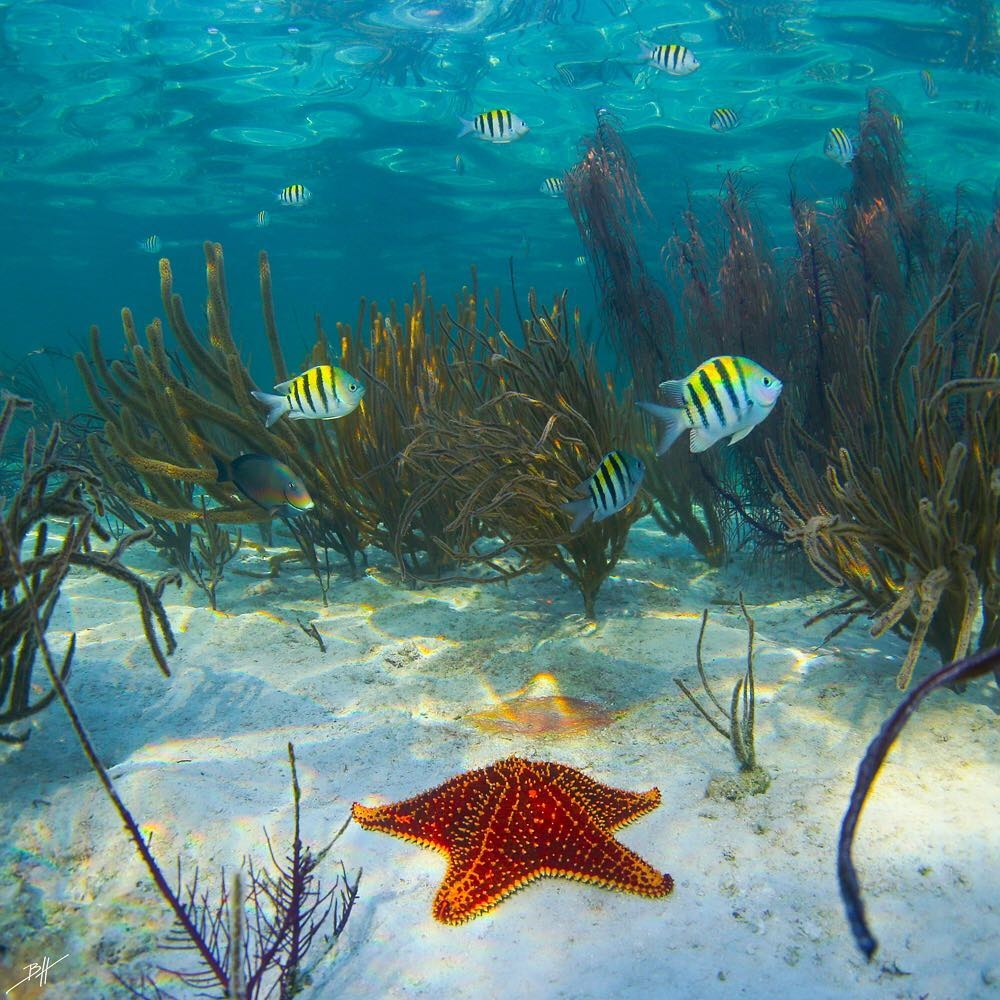 Поразительные подводные фотографии Бена Хикса (9)