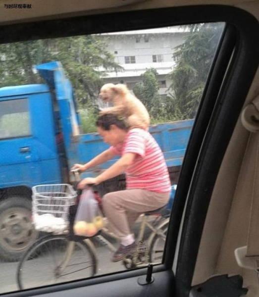 Такое можно увидеть только в Азии (35 фото) (13)