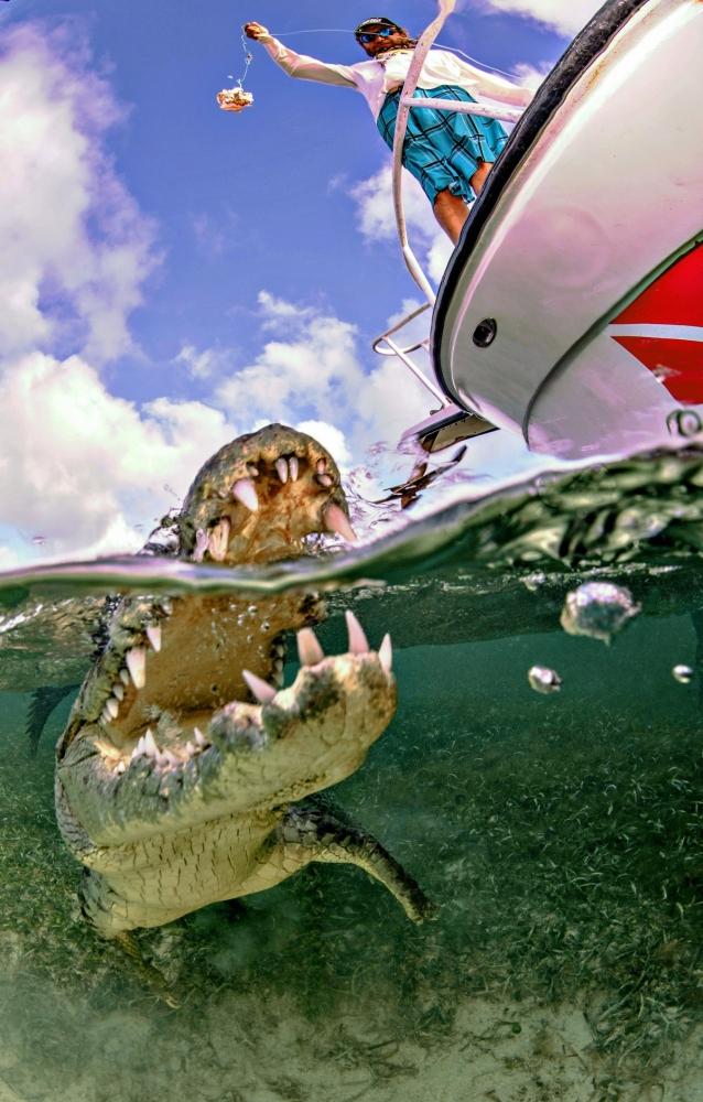 Впечатляющая фотосессия с крокодилами (1)