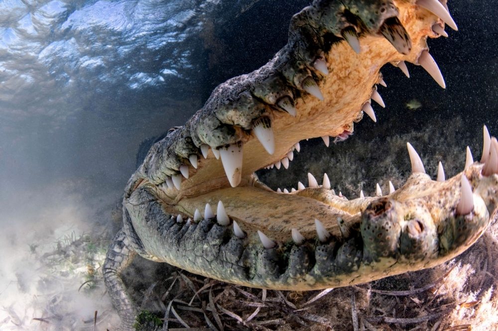 Впечатляющая фотосессия с крокодилами (10)
