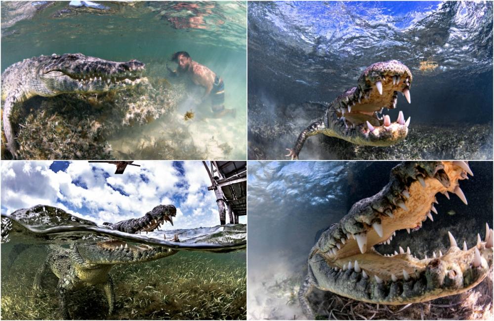 Впечатляющая фотосессия с крокодилами (2)