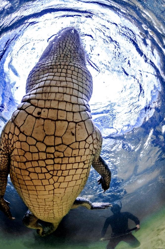 Впечатляющая фотосессия с крокодилами (4)