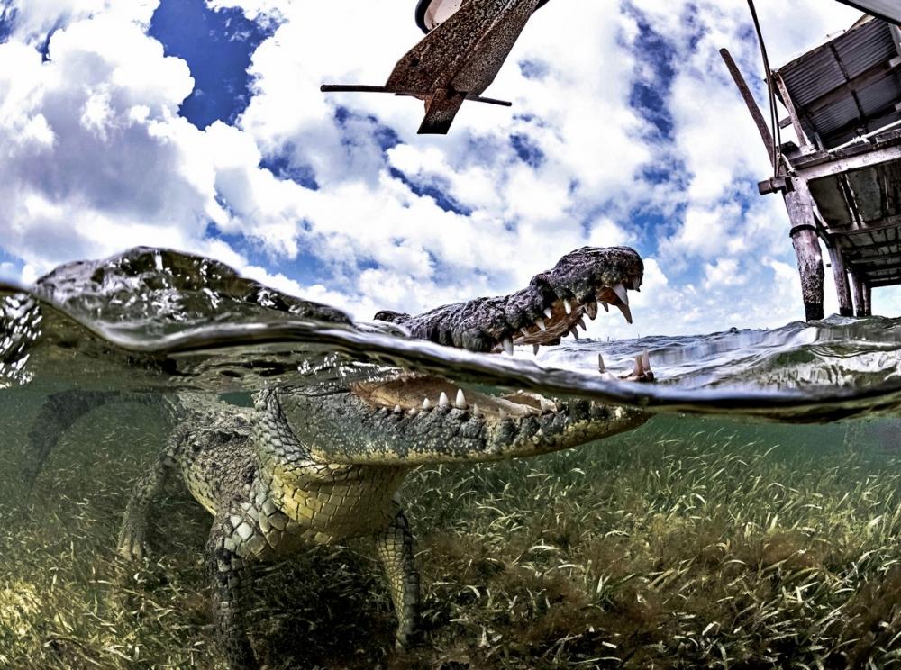 Впечатляющая фотосессия с крокодилами (6)