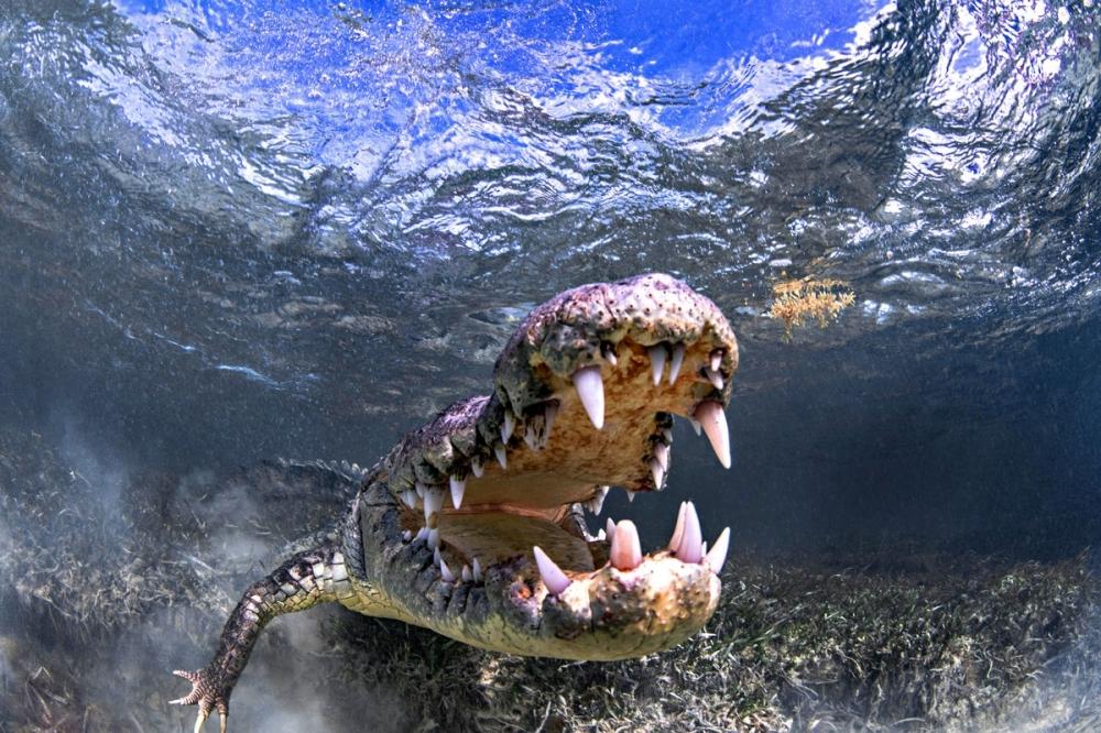 Впечатляющая фотосессия с крокодилами (7)