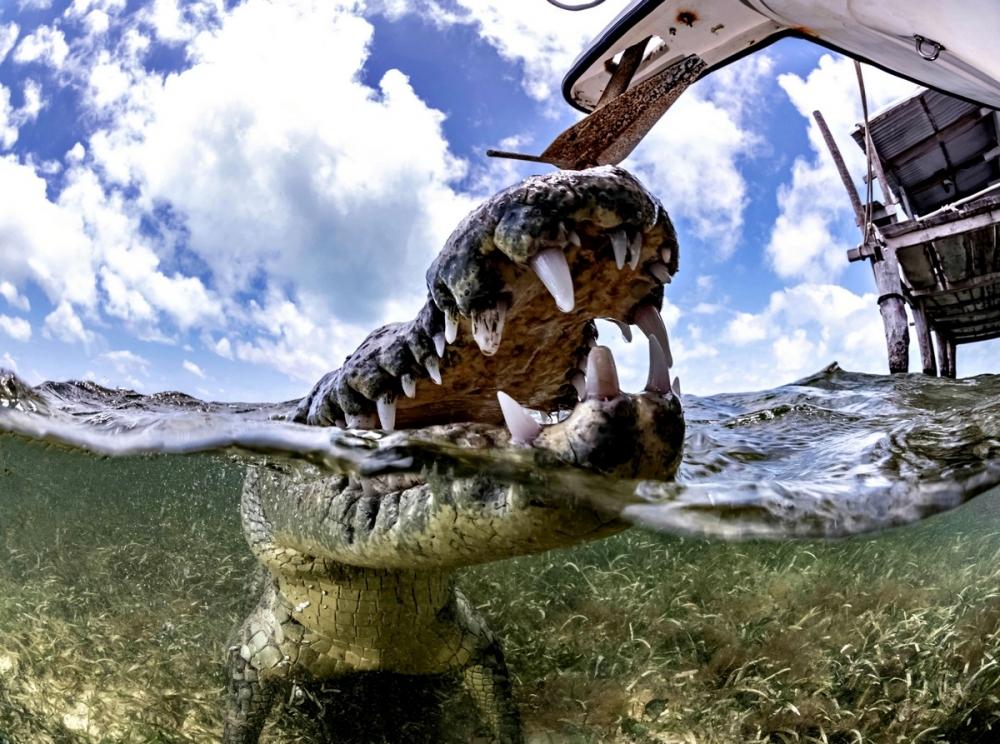 Впечатляющая фотосессия с крокодилами (9)