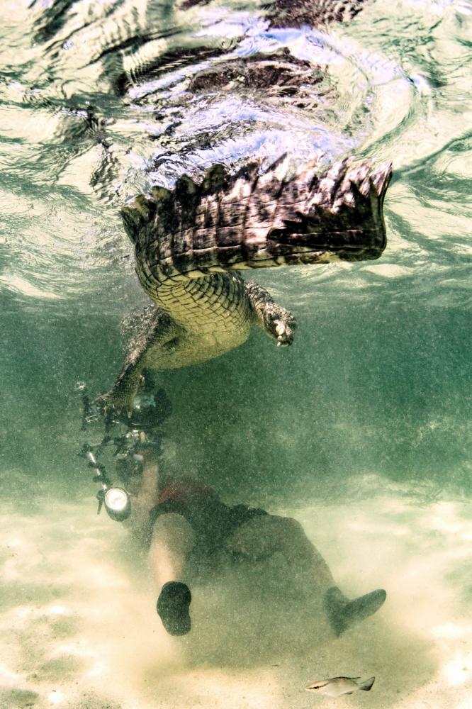 Впечатляющая фотосессия с крокодилами