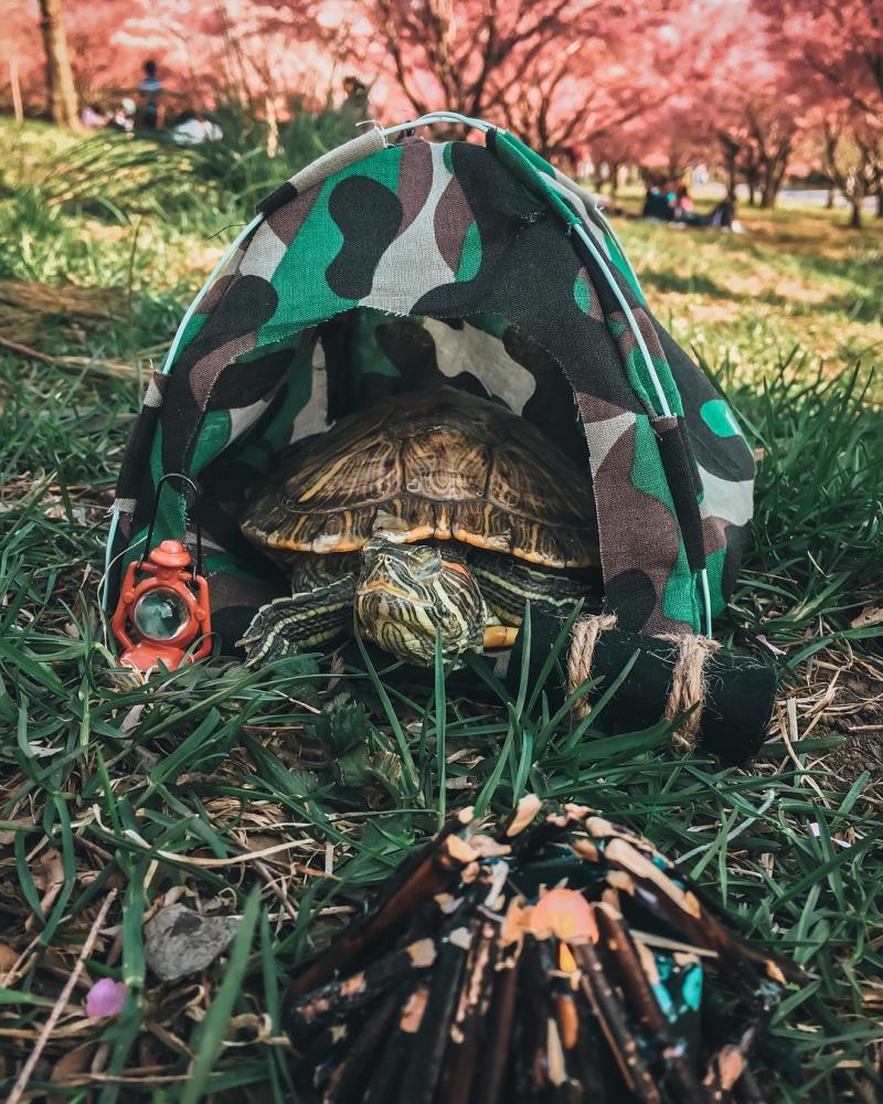 За приключениями пары черепах наблюдают тысячи поклонников в Instagram (10)