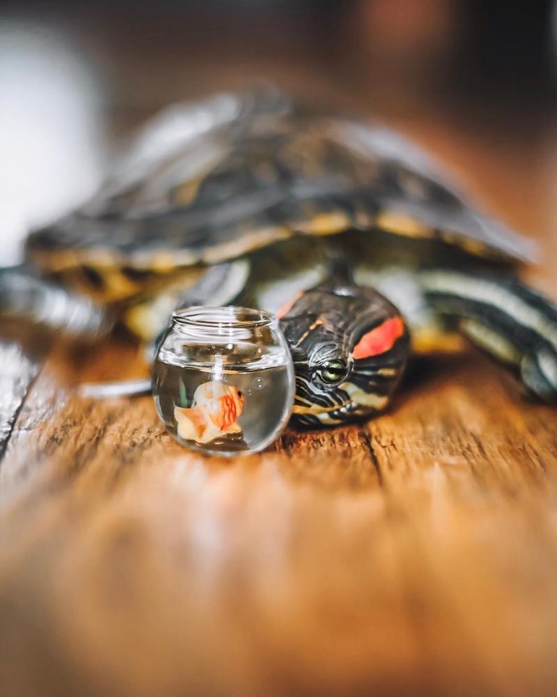 За приключениями пары черепах наблюдают тысячи поклонников в Instagram (11)