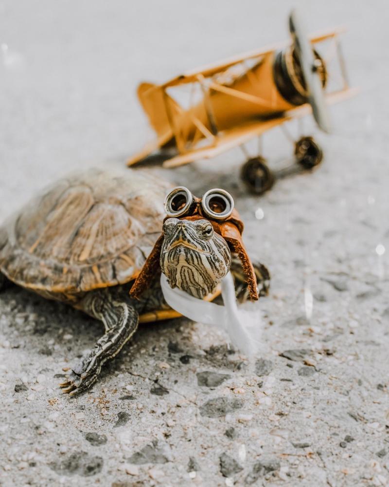 За приключениями пары черепах наблюдают тысячи поклонников в Instagram (14)