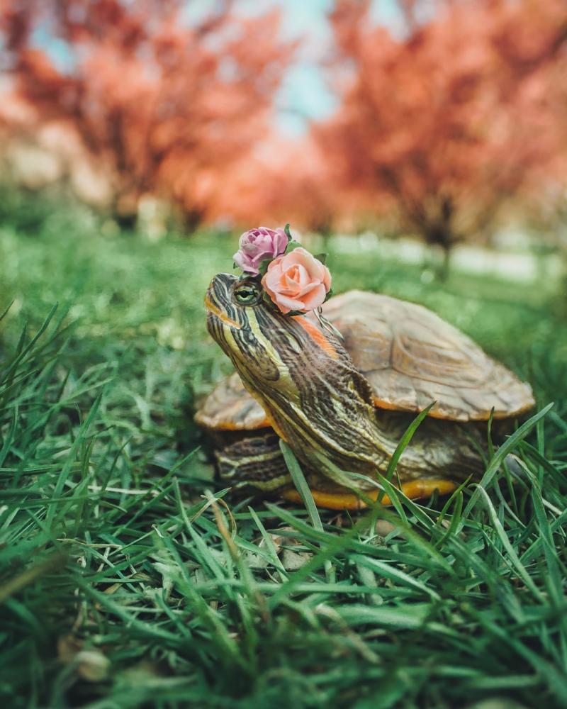 Пара черепах прославилась в Instagram фотографиями своих путешествий