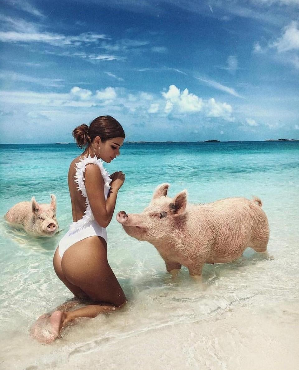 Популярные свинки с Багамских островов на грани исчезновения