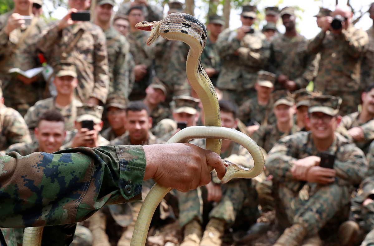 A Thai soldier is bitten by a snake as he presents non-venomous snakes during the Cobra Gold multilateral military exercise in Chanthaburi