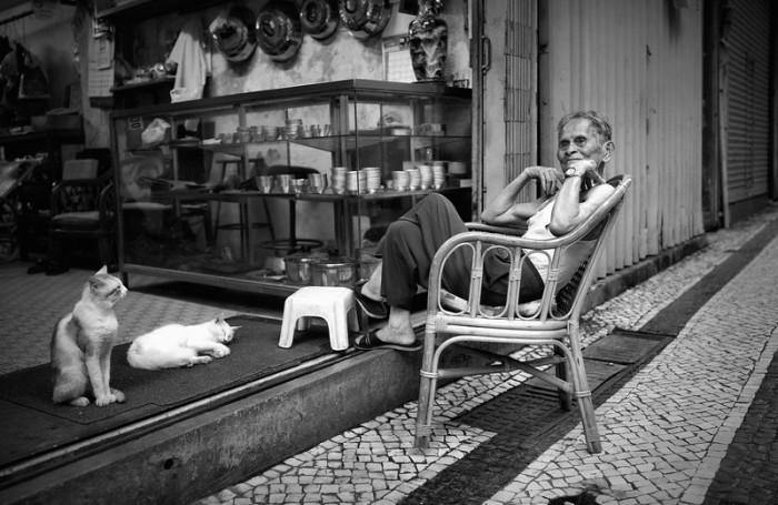 Городские кошки. Автор: Rui Palha.
