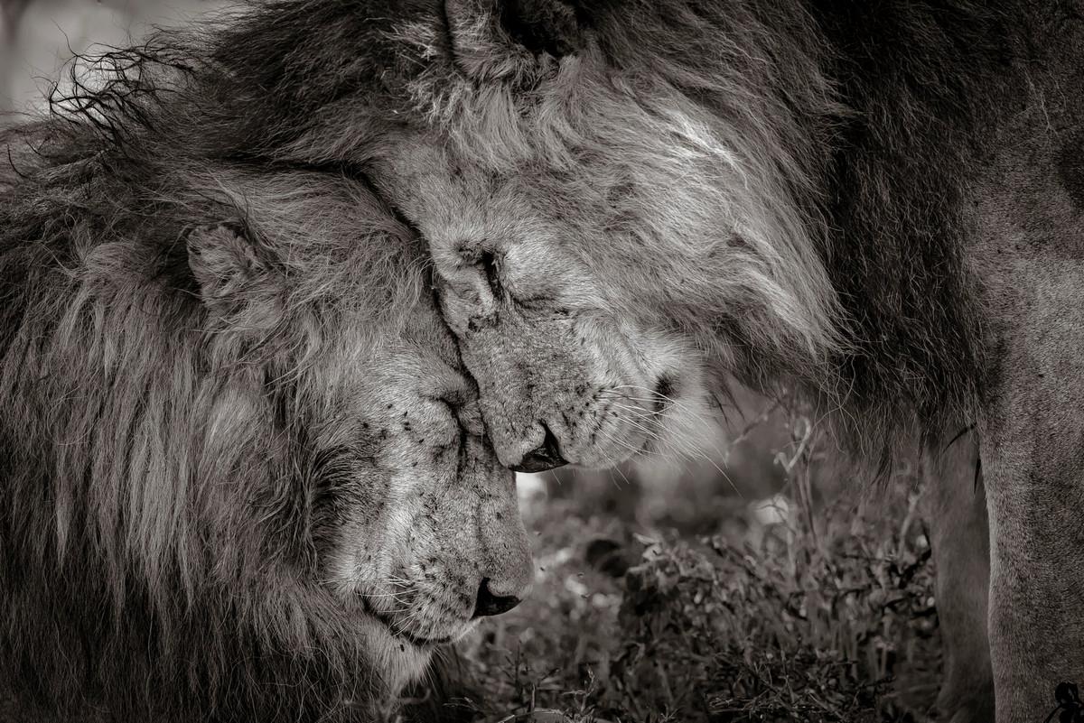 Изумляющие фотографии дикой природы с конкурса LUMIX People_s Choice Award 1